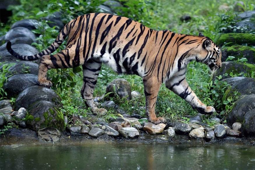 """Image result for Valmiki Nagar Tiger Reserve"""""""